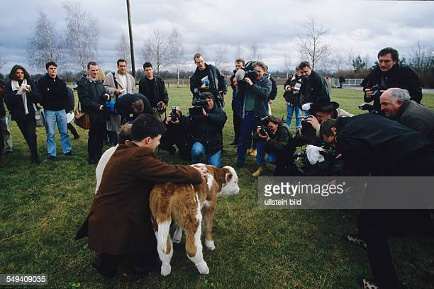 Germany Munich Gene Center of LudwigMaximiliansUniversity Professor Eckhard Wolf presents the first German clone calf born to the press