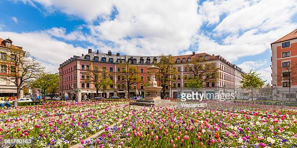 Germany, Munich, view of blossoming tulips on Gaertnerplatz