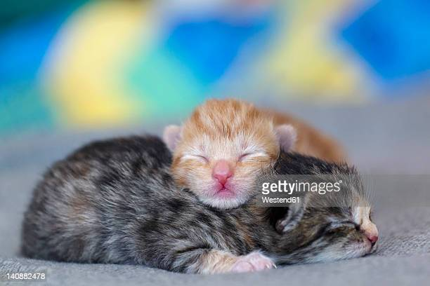germany, newborn kittens sleeping on blanket, close up - gattini appena nati foto e immagini stock