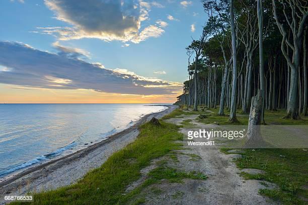 Germany, Nienhagen, Gespensterwald, beach and sunrise