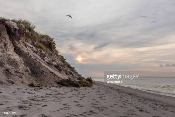 germany, north frisia, sylt, hoernum, empty beach at sunrise - küste stock-fotos und bilder
