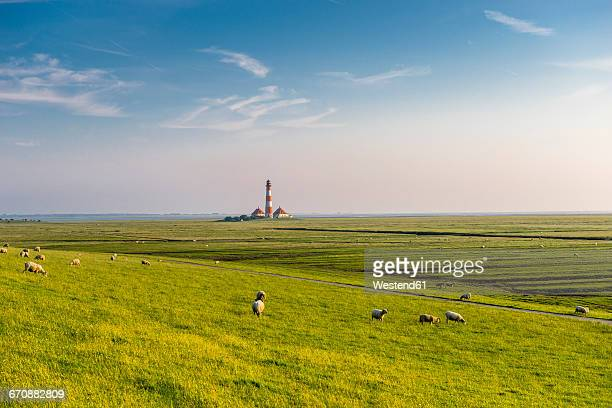 germany, north frisia, westerheversand lighthouse with sheep on meadow - schleswig holstein stock pictures, royalty-free photos & images