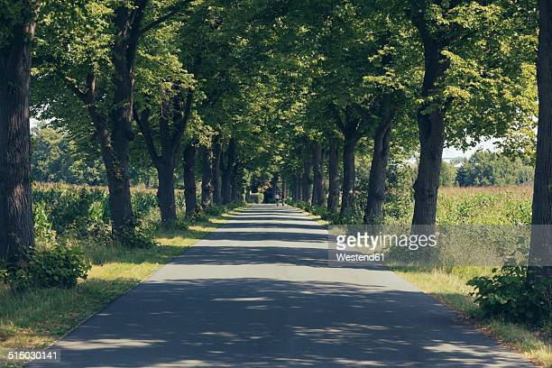 germany, north rhine-westphalia, alley near handorf - avenue stock pictures, royalty-free photos & images