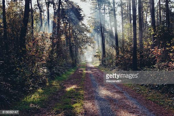 Germany, North Rhine-Westphalia, Coesfeld heath