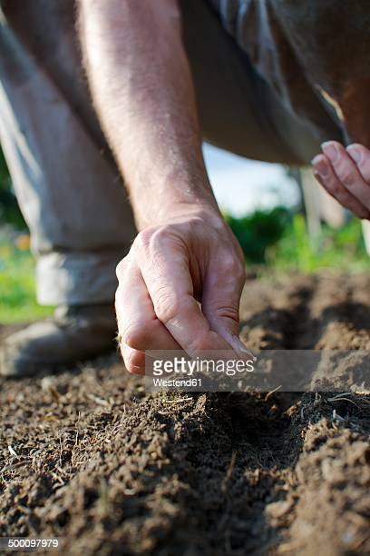 Germany, North Rhine-Westphalia, Petershagen, Man in a garden sowing land cress
