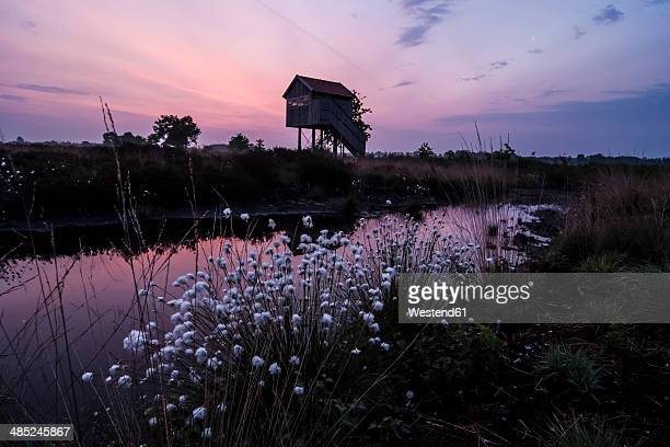 Germany, North Rhine-Westphalia, Recker Moor, Landscape with cotton grass at sunrise