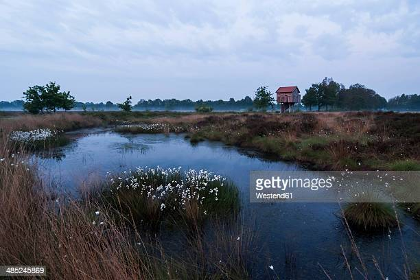 germany, north rhine-westphalia, recker moor, landscape with cotton grass - bog stock photos and pictures