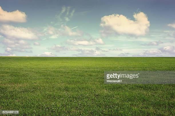 germany, north rhine-westphalia, rhein-sieg-kreis, bergisches land, meadow and clouds - gras stock-fotos und bilder