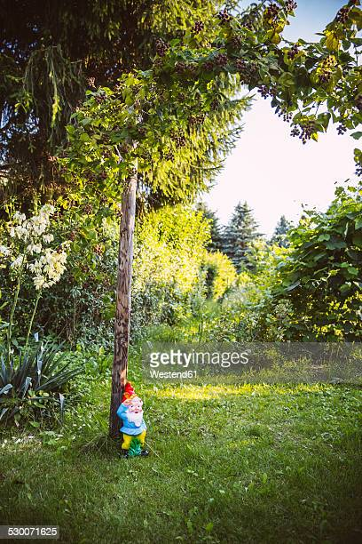 Germany, Northrhine Westphalia, Bornheim, Gardengnome under tree