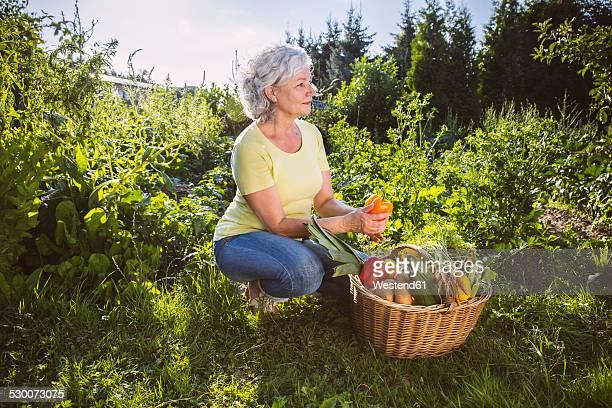 Germany, Northrhine Westphalia, Bornheim, Senior woman with vegetable basket in garden