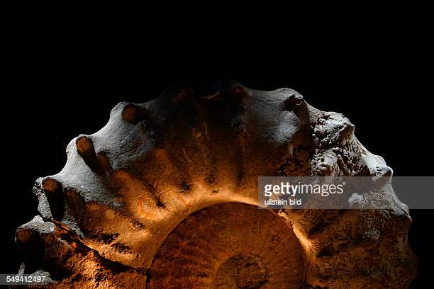 Ammonites cephalopods in the exhibition of the Ruhrland Museum