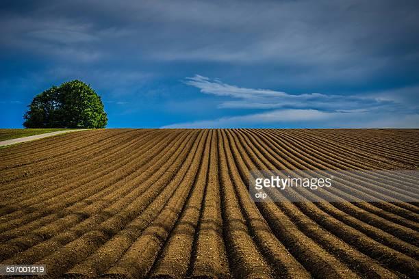 Germany, Obereisesheim, Neckarsulm, Tree on plowed field