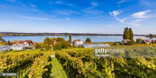 Germany, Oberzell, view to Lake Constance with vineyards in the foreground