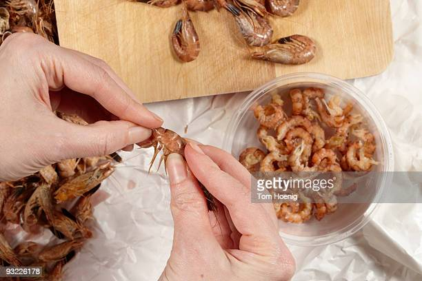 Germany, Person shelling North sea prawns (Crangon crangon), elevated view, close-up