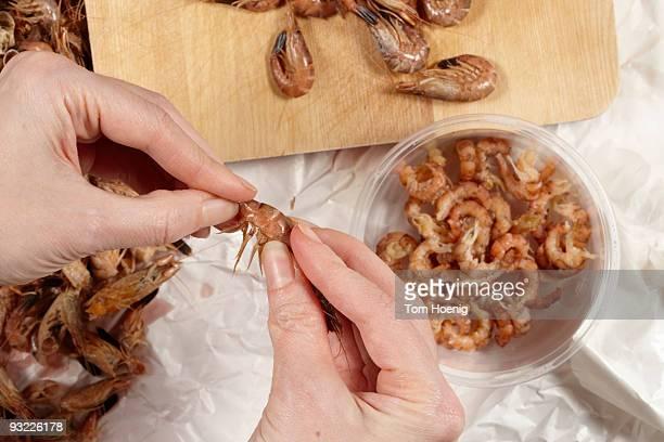Germany, person shelling North sea prawns (Crangon crangon), elevated view