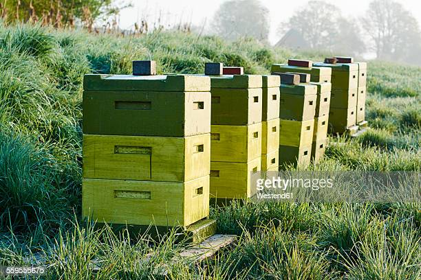 Germany, Petershagen, row of beehives