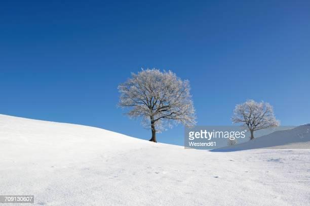 Germany, Pfaffenwinkel, frost-covered trees at winter landscape