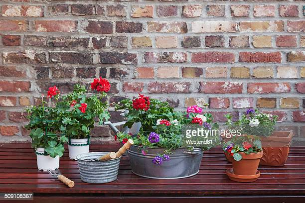 Germany, Plants for the balcony