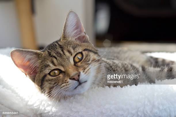 Germany, Portrait of a cat lying on white cushon