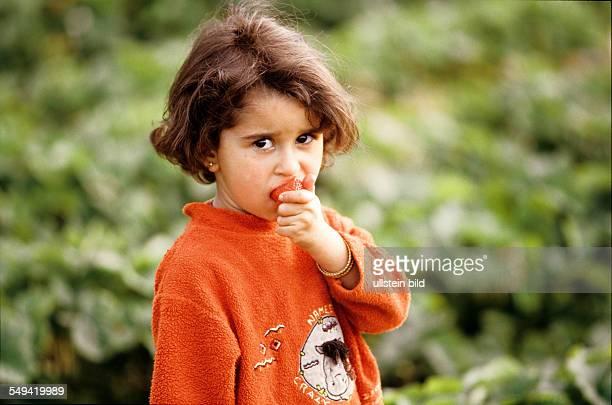 DEU Germany Recklinghausen A child nibbling on a strawberryfield