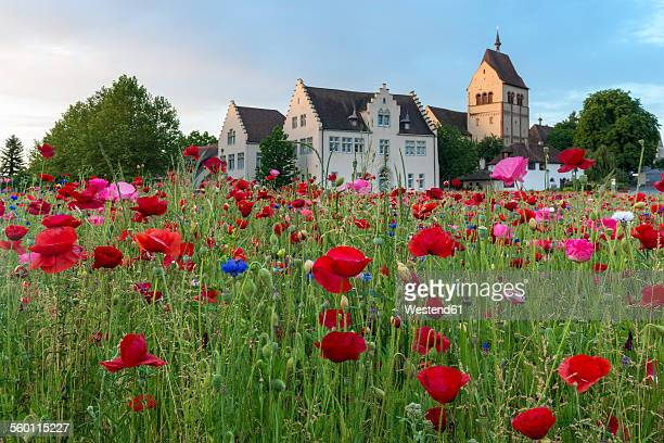 germany, reichenau island, minster st. maria und markus - bodensee stock pictures, royalty-free photos & images