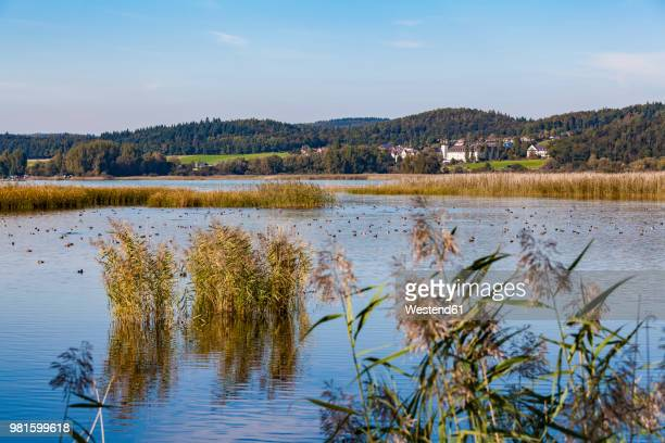 Germany, Reichenau, Wollmatinger Ried