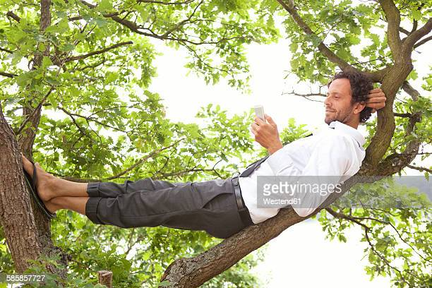germany, relaxed businessman lying in tree looking at cell phone - gelassene person stock-fotos und bilder