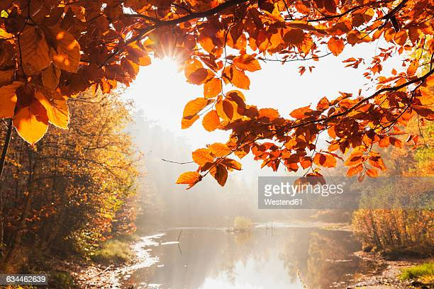 Germany, Rhineland Palatinate, Ungeheuersee in autumnal Palatinate Forest at haze