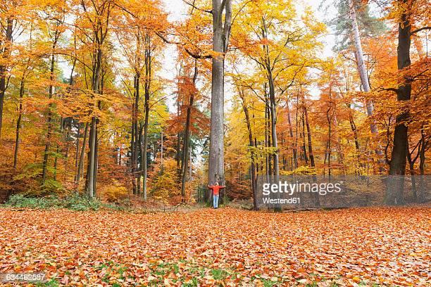 Germany, Rhineland Palatinate, woman embracing tree in autumnal Palatinate Forest