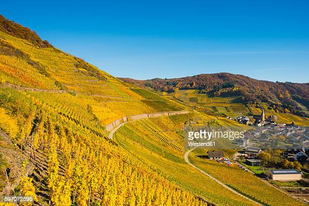 Germany, Rhineland-Palatinate, Eifel, Ahr Valley, Mayschoss, Vineyard in autumn