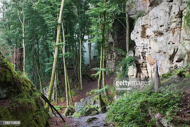 Germany, Rhineland-Palatinate, Eifel Region, South Eifel Nature Park, View of bunter rock formations at beech tree forest