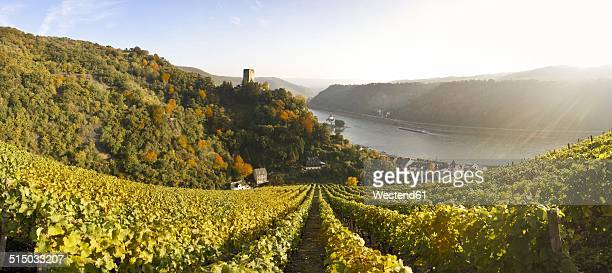 Germany, Rhineland-Palatinate, Kaub, Gutenfels Castle with vineyards in the foreground