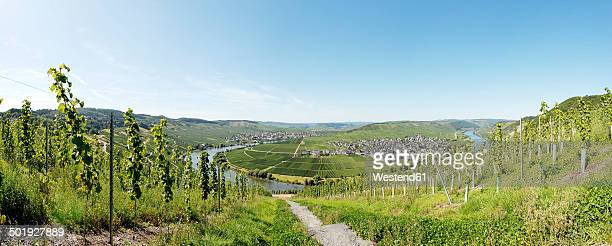 germany, rhineland-palatinate, panoramic view of the moselle river and vineyards near trittenheim - moselle stock-fotos und bilder