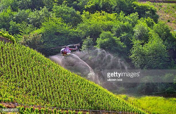 Germany RhinelandPalatinate TrabenTrarbach vineyards at the River Mosel helicopter is spraying agricultural pesticide