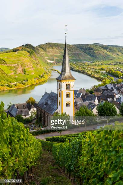 germany, rhineland-palatinate, vineyards above bremm on the moselle river - ラインラント=プファルツ州 ストックフォトと画像