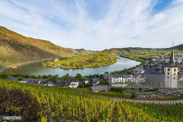 germany, rhineland-palatinate, vineyards above bremm on the moselle river - moseltal stock-fotos und bilder