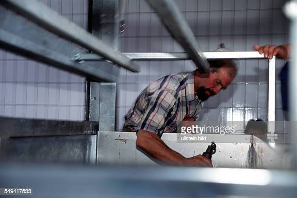 DEU Germany Ruhrgebiet Luenen Turkishislamish sacrifice celebration The Turks slaughter their bought animals at the farm