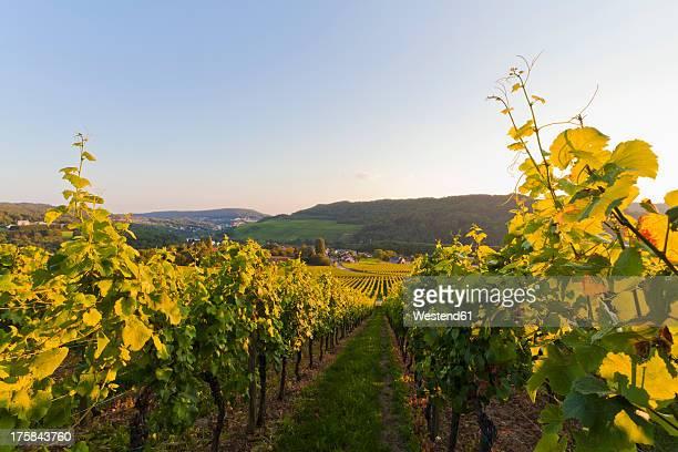 Germany, Saarland, View of vineyards