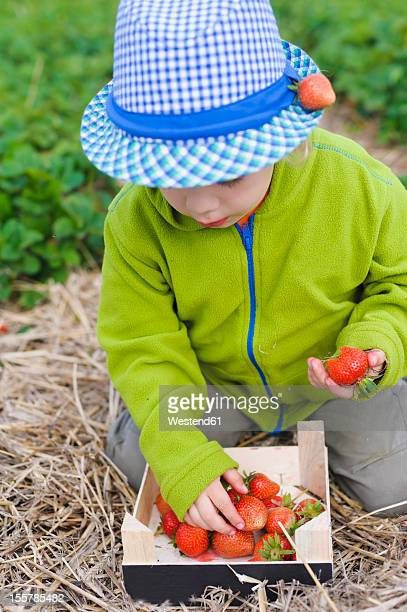Germany, Saxony, Boy picking strawberry from wooden box, close up