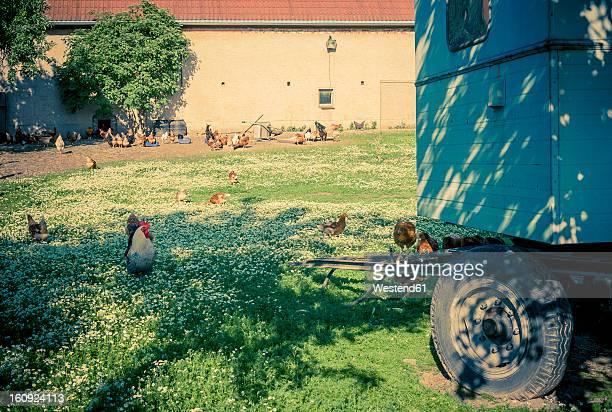 Germany, Saxony, Chicken trailer in organic farm