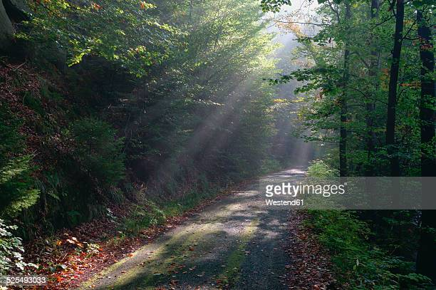 Germany, Saxony, Saxon Switzerland, Kirnitzsch, sunbeams shining on forest track