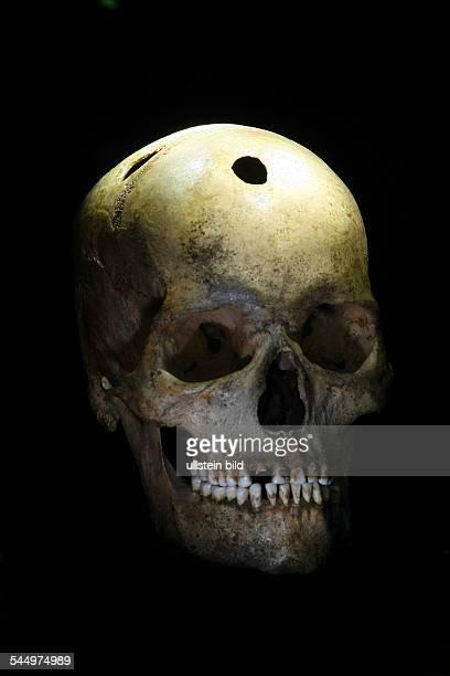 Germany SaxonyAnhalt Halle State Museum of Prehistory reopening after reorganisation trepanning cranium habitat at Saale circuit