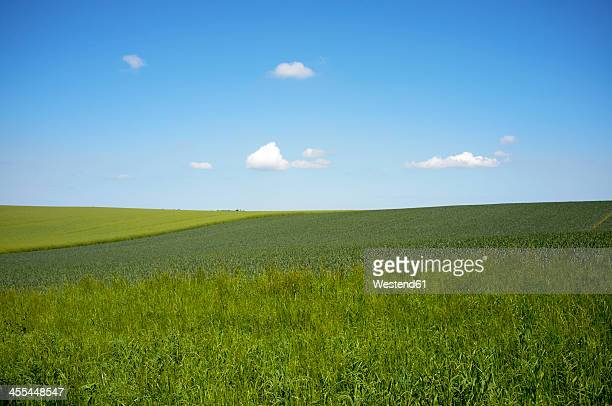 Germany, Schleswig Holstein, View of grassland