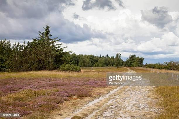 Germany, Schleswig-Holstein, Fehmarn, Nature Reserve Gruener Brink, heath, way