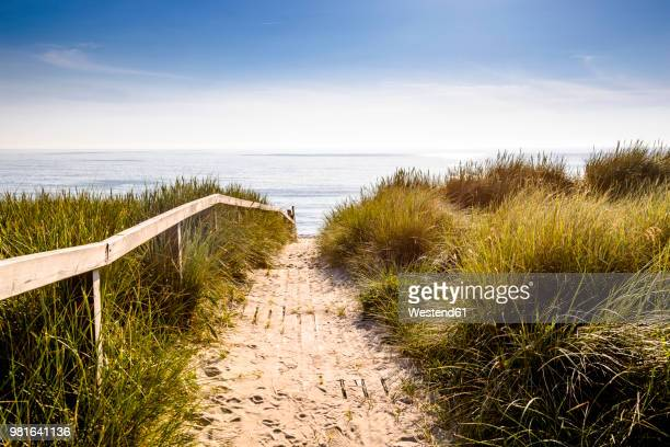 germany, schleswig-holstein, sylt, path through dunes - north sea stock pictures, royalty-free photos & images