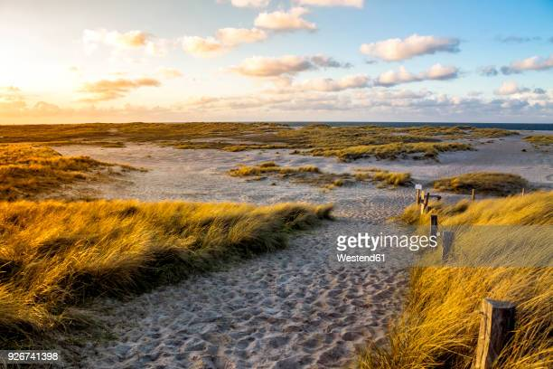 germany, schleswig-holstein, sylt, wenningstedt - north sea stock pictures, royalty-free photos & images
