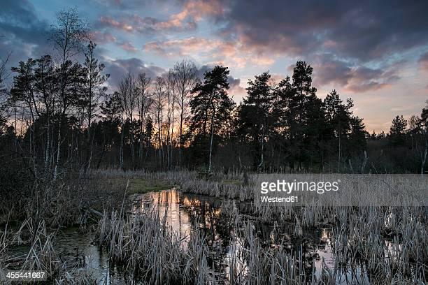 Germany, Schwenninger Moos, View of nature reserve, source of Neckar at sunset