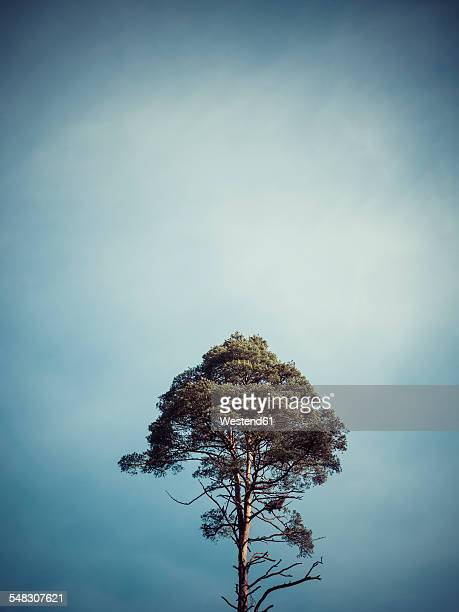 Germany, single tree in front of sky