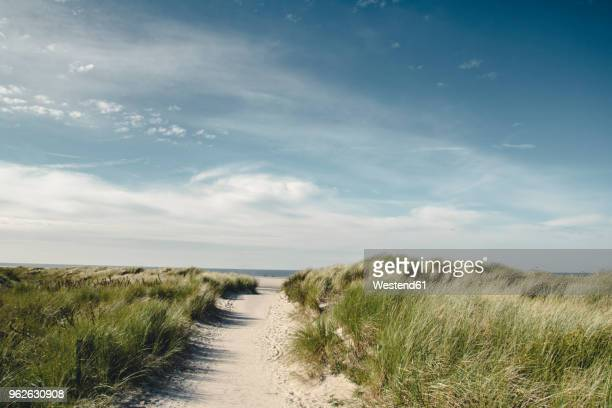 germany, spiekeroog, path through dunes - north sea stock pictures, royalty-free photos & images