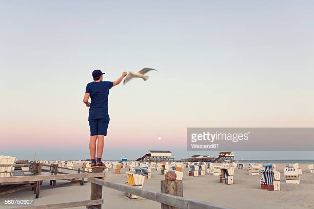 Germany, St Peter-Ording, young man standing on wooden fence feeding seagulls